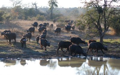 Its dry in the African Bushveld